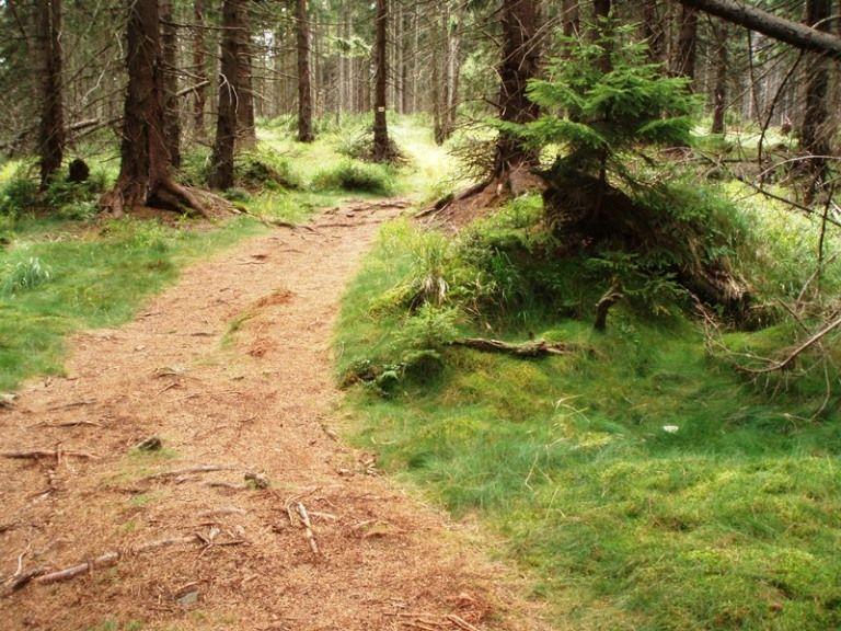Ścieżka przez las w Górach Stołowych