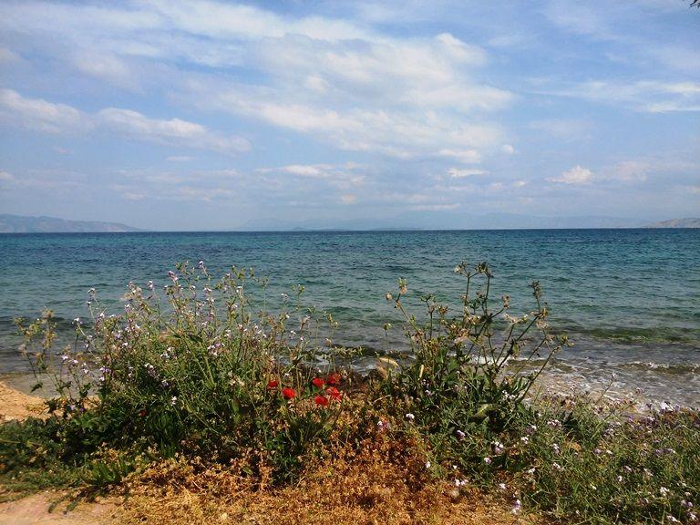 Agistri - brzeg morza