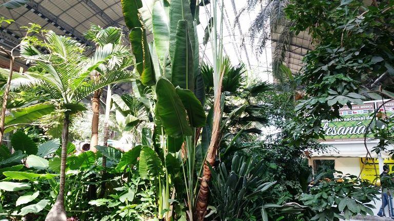 Madryt - ogród tropikalny na dworcu kolejowym