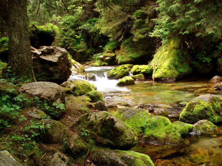 Dolina Kościeliska - potok