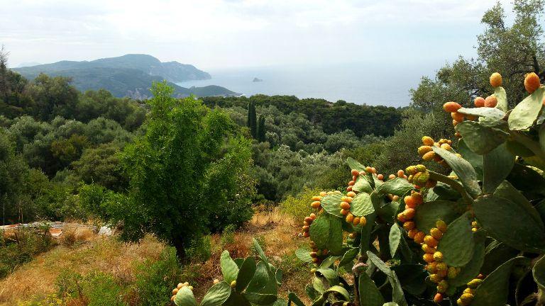 opuncje na Korfu
