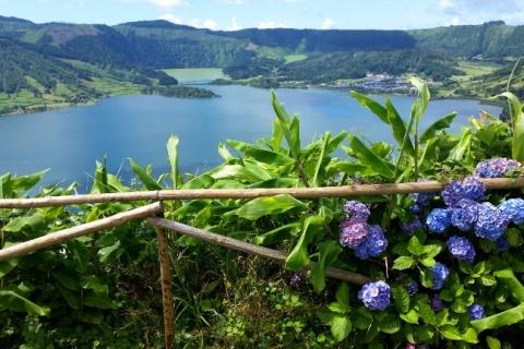 Sao Miguel, czyli kwitnące hortensje, zieleń i ocean