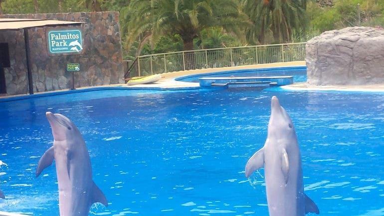 Palmitos Park - delfiny