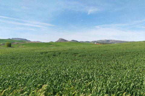 Andaluzja – zwiedzanie, pogoda w marcu, kuchnia i inne informacje praktyczne
