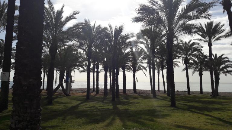palmy w Torremolinos