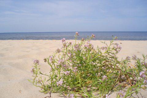 Co ciekawego można zobaczyć nad Bałtykiem? Atrakcje natury