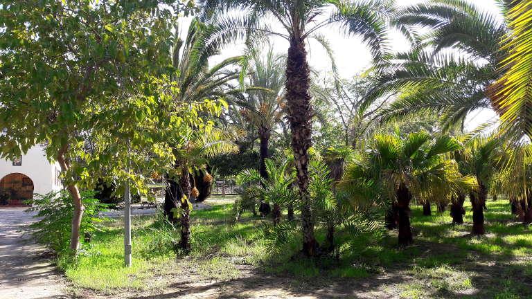 Palmowa alejka koło szkoły muzycznej