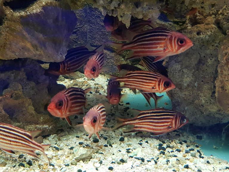 ryby w Oceanarium