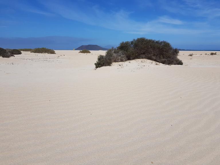 wydmy w Corralejo